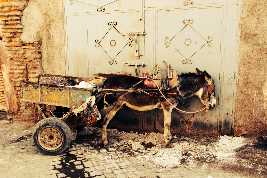 2Fabi_Marrakech_Ane.jpg